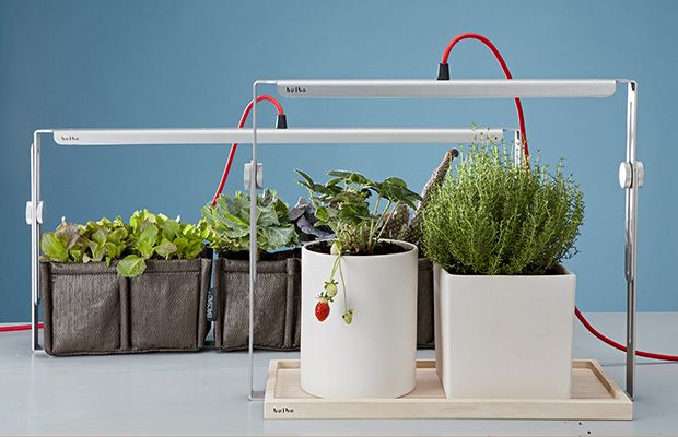 Lights for indoor plant growing - Luci per orto in casa Bulbo Quadra - HiTech News