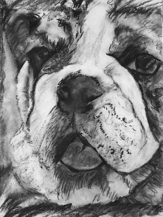 English bulldog print, charcoal english bulldog drawing,dog gift, giclee print,dog portrait, bullddog puppy,bulldogs,… #dogs #etsy #art