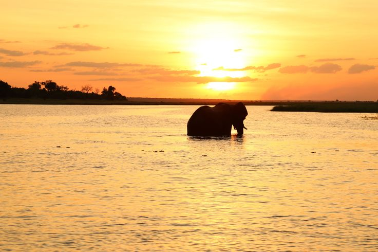 So Africa. Elephant Sunset by CarlyTakesPictures on Etsy