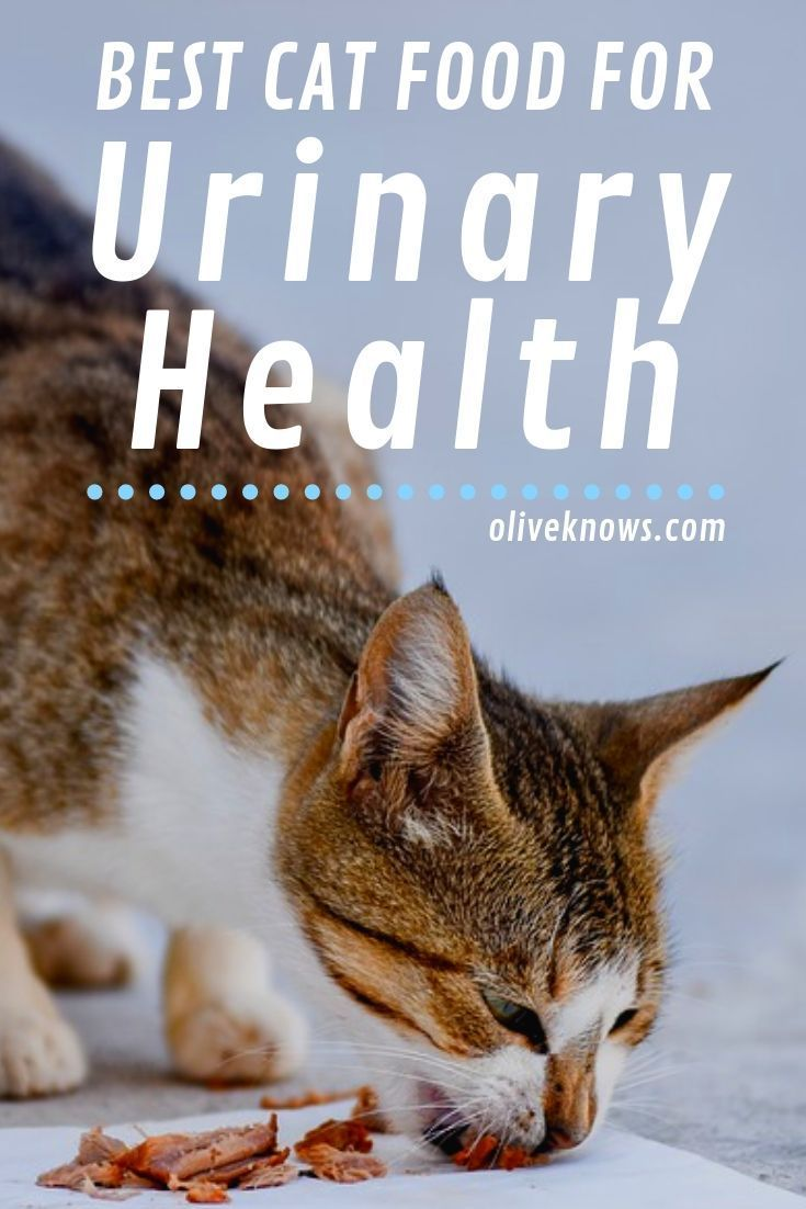 Best Cat Food For Urinary Health Best Cat Food Cat Food Urinary Health