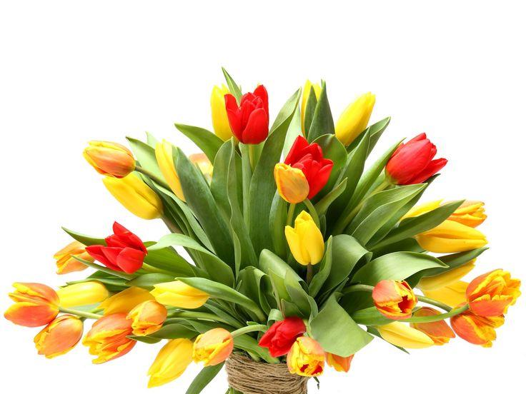 Lenyűgöző tulipán csokor    #flowers#bouquet#viragszoro#viragszoroviragkuldes#tulip#tulips