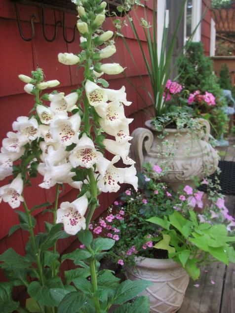 Cottage gardens to love | Landscaping Ideas and Hardscape Design | HGTV