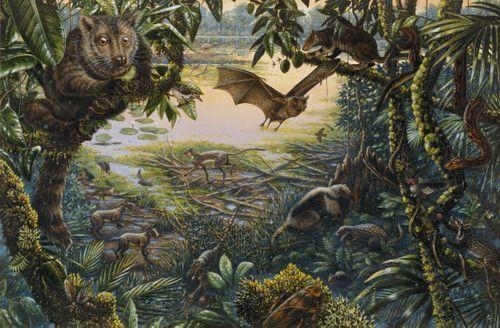 Los primates proceden del periodo Eoceno (56-34 mlls), donde predominaba los mamíferos y se inició los primeros prototipos de los animales con los que el humano comparte el planeta. Comprende el tiempo entre el final del Paleoceno y el principio del Oligoceno.
