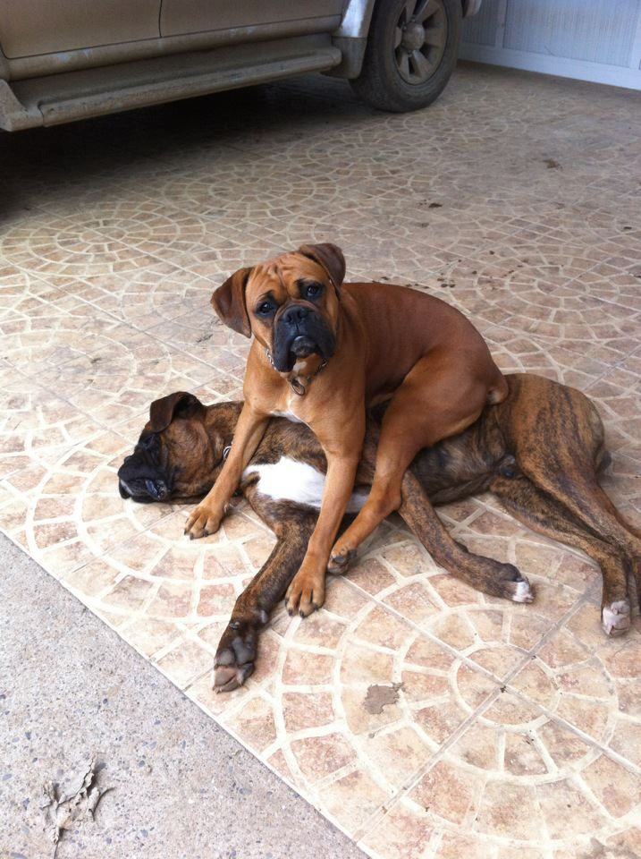 Boxers sit where the want