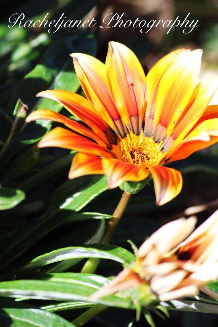 Flowers, colours, beautiful, garden
