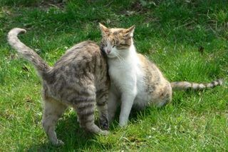 How to Make Homemade Cat Repellent (5 Steps)   eHow