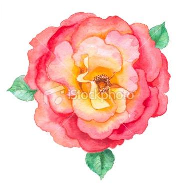romantic watercolor illustrations - Google Search
