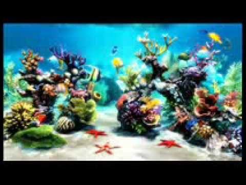Beautiful Aquarium,  Background music ,Relaxing music