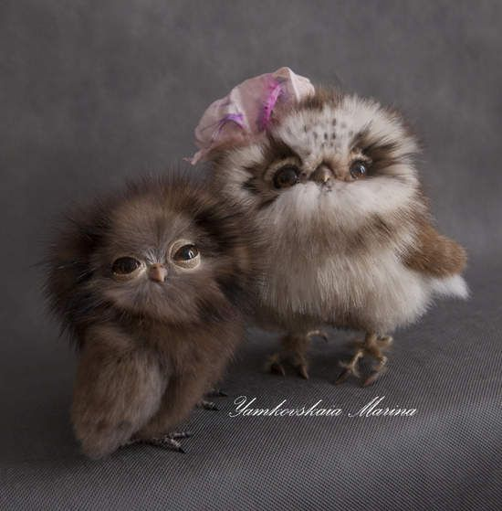 25 Best Ideas About Baby Owls On Pinterest Cute Baby