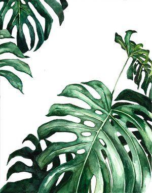 Monstera Plant Watercolor Ampersandmother Com