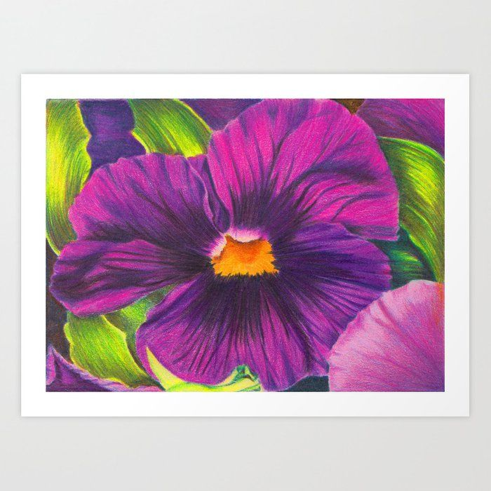 Purple Pansy Flower Colored Pencil Drawing Art Print By Sacred Semita X Small In 2020 Colorful Flowers Purple Pansy