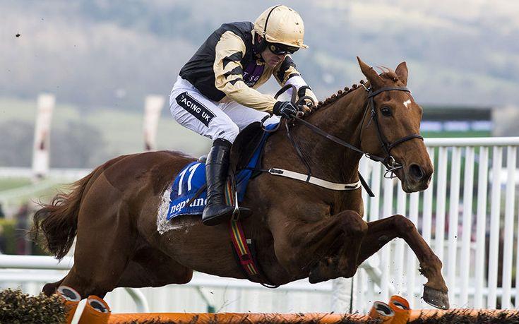 racing horse hexham  novice hurdle