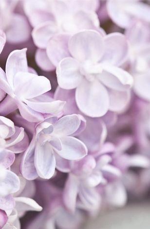 sweet-bellaluna
