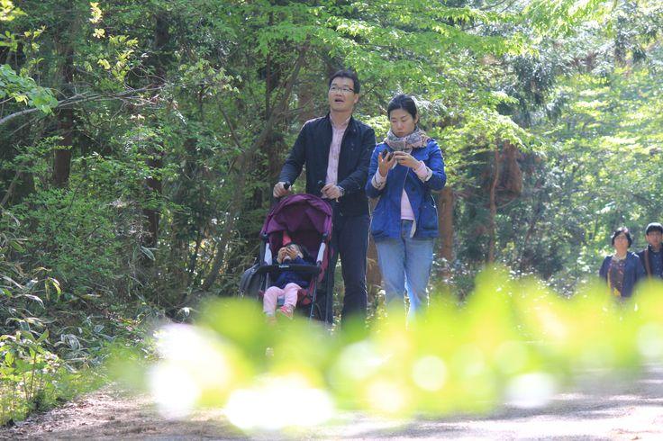제주도 자연이  아름다운 사려니숲 연인들의 산책로