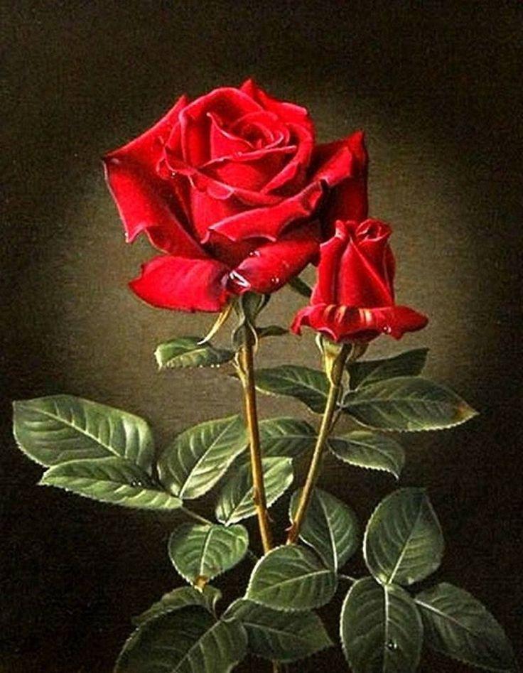 фото с сайта Secret Garden