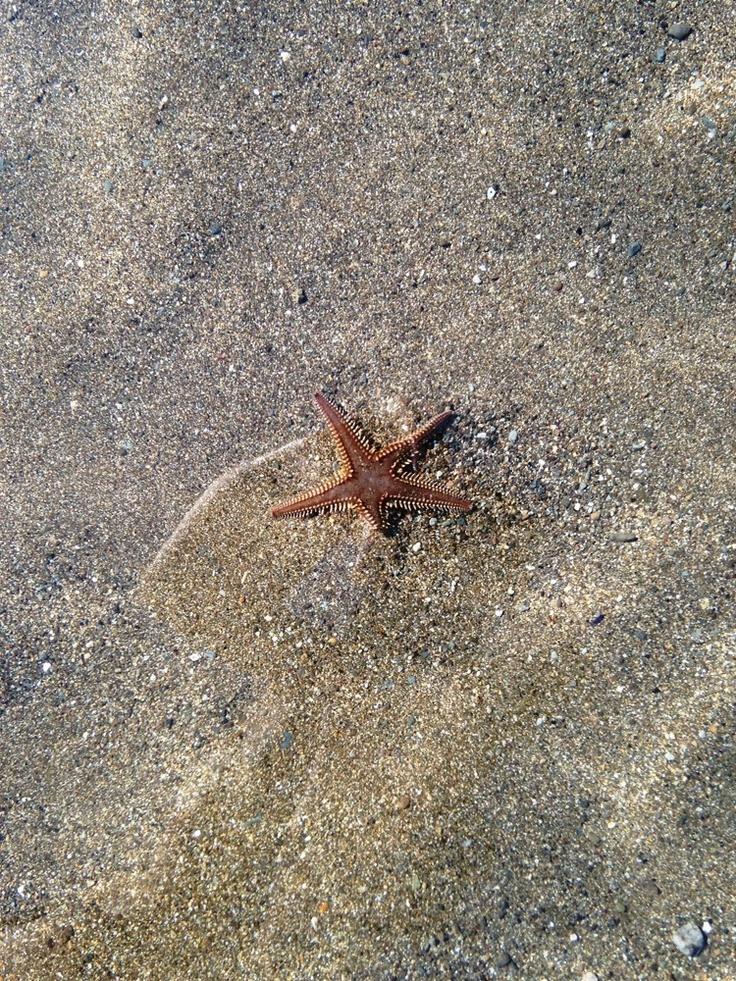 """17 Giugno 2013. Il """"buongiorno"""" di una stella marina a Calarossano. Foto di Silvia Maltese."""