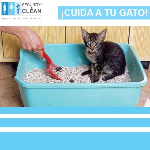 ¡La caja de arena del gato necesita una rutina de limpieza también! Es recomendable renovar toda la arena dos veces a la semana mínimo y cambiar de caja una vez al año.