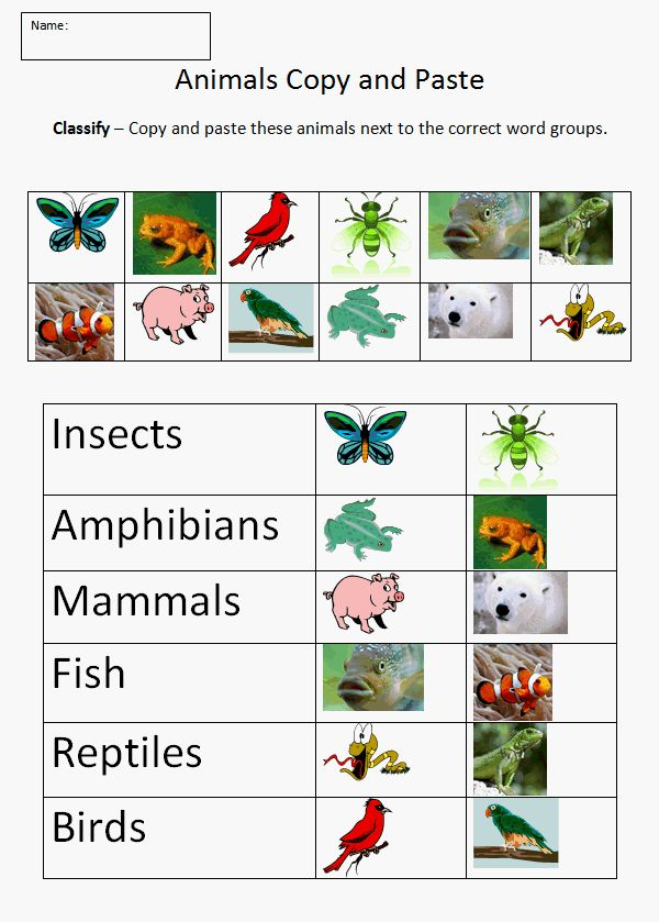 Animal classification this helps younger kids to get a visual of each animal in each classification