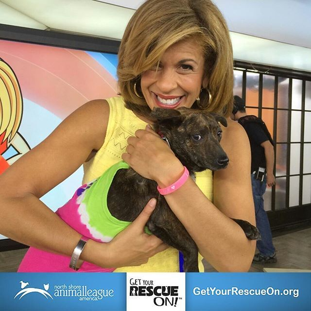 Hoda Kotb of NBCs @TODAYSHOW gets her rescue on in Studio 1A of Rockefeller Plaza! Help give loving homes to adorable animals by checking out http://ift.tt/1Lh4E1b! #GetYourRescueOn