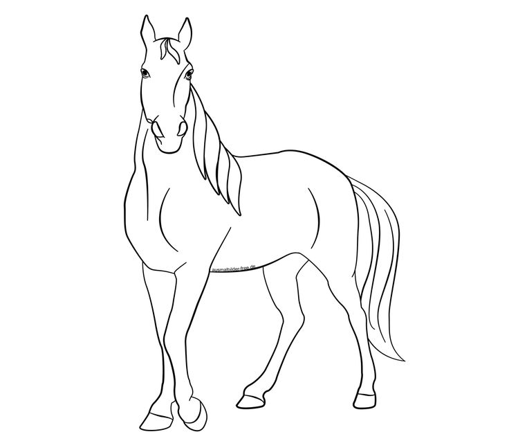√ ausmalbilder pferde tinker  tinkerbell ausmalbilder zum
