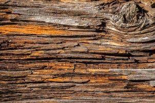 XL-541 Vliesová obrazová fototapeta XL - Tree bark - strochnivělá deska - suk, velikost 330 x 220 cm