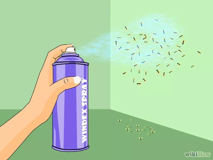 Imagen titulada Get Rid of Fruit Flies Step 13