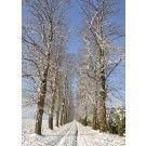 Zakelijke kerstkaart 6216 - Zakelijke kerstkaarten kunt u online bij Seasoncards.nl bestellen en kopen.