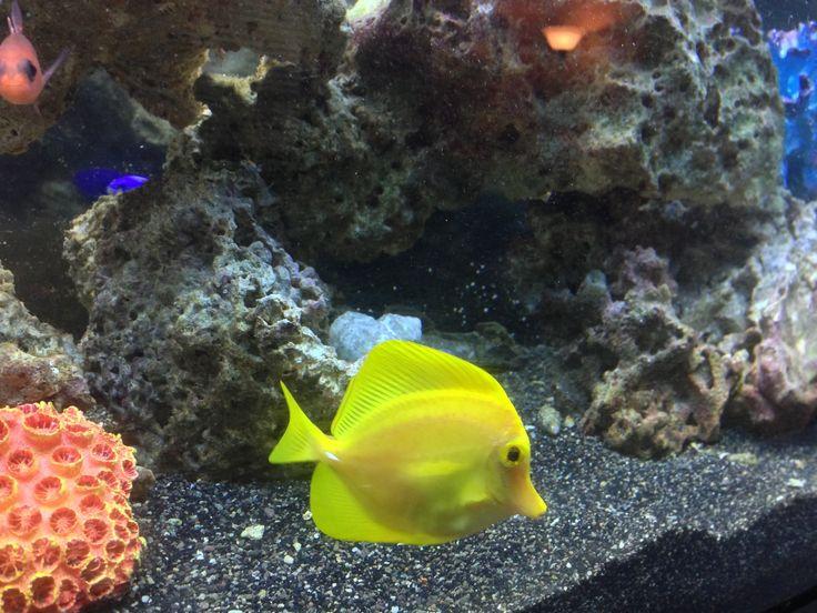 75 best saltwater tank koi pond idea images on pinterest for Saltwater fish pond