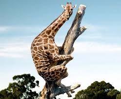 Картинки по запросу самые смешные картинки животных