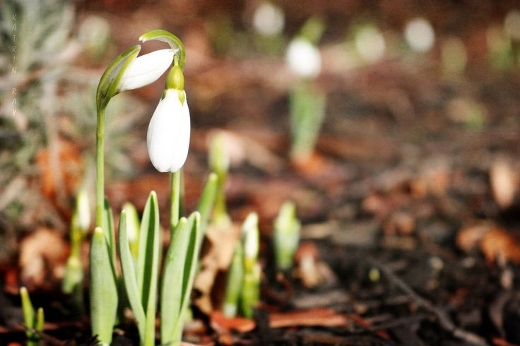 The snowdrops are adding such a magic touch to our winter. Though it's snowing here again, I hope they will be fine and warm spells will comeback soon. Loved how these two care for each other :-)