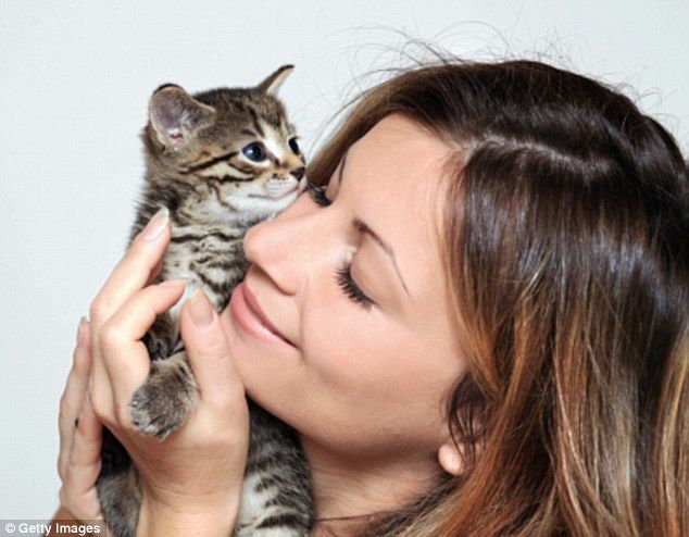 Cuddling your kitten could KILL you: CDC warns adorable felines carry deadly bacteria that causes brain swelling and heart infection CDC has issued new warning to cat owners: don't kiss your kittens Cats carry bacteria that can cause fever, brain swelling, heart infection Report says increasingly cases of 'cat-scratch disease' reach hospital