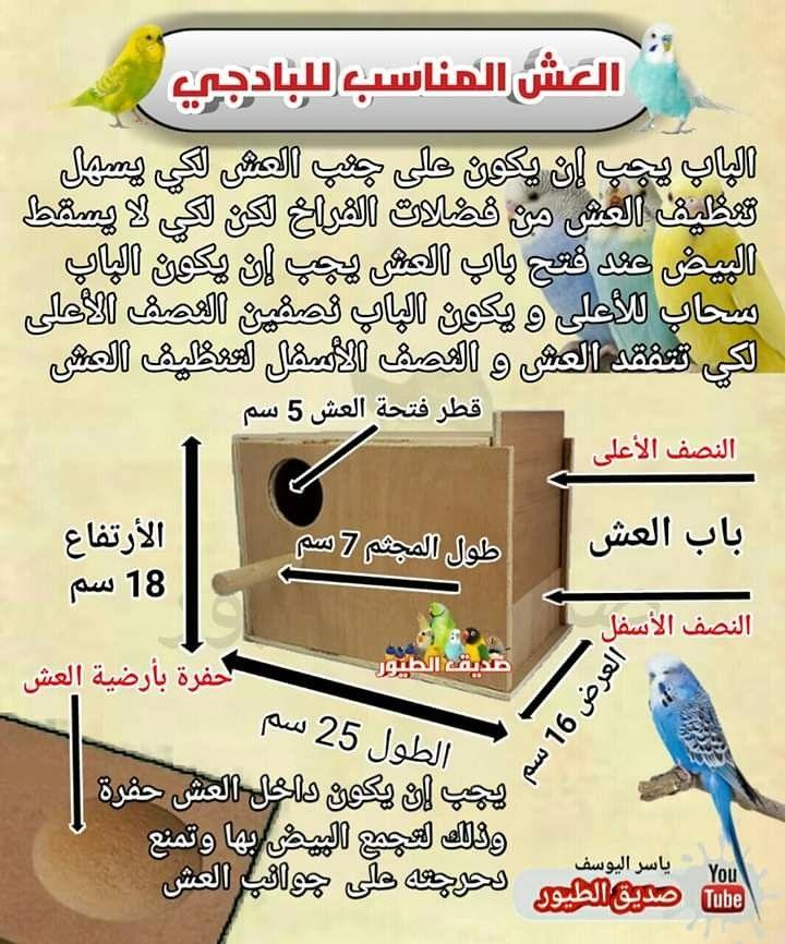 Pin By Oussama Benslimane On Nids D Oiseaux Monopoly