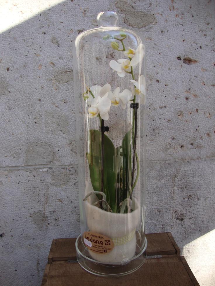 www.floresenvalladolid.es  paseo zorrilla 44 Valladolid  983338872