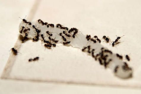 The Nickel Pincher: Beat Back Household Bugs http://www.rodalenews.com/natural-insect-control