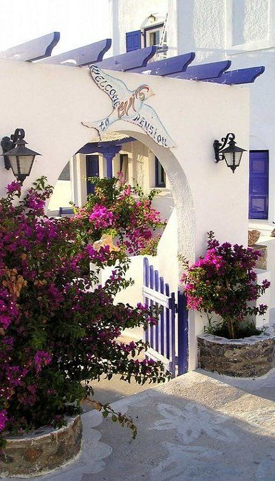 Bougainvillea.. Amorgos Island (Cyclades), Greece