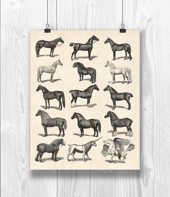 Horse Art Horse breeds poster Equestrian Print by PrintCorner