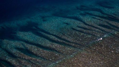The Great barrier Reef is Dying and there's nothing we can do http://gizmodo.com/a-nightmare-is-unfolding-in-the-great-barrier-reef-1767702006