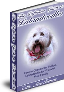 Learn the secrets of the top Labradoodle breeders on how to choose the right one.  $16.95 #pet care, #animal care,#pet training