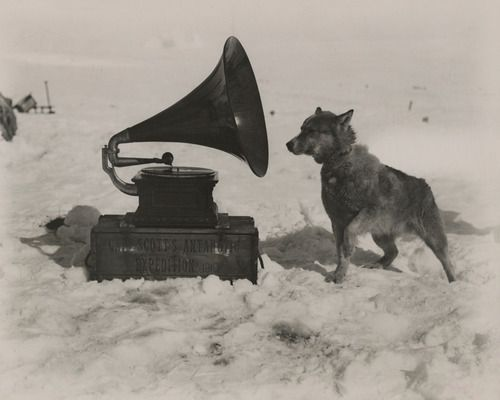 To entertain the men, Captain Robert Scott took a gramophone on his South Pole Expedition. Chris, one of his dogs, was apparently also a fan, September 1911. Photograph by Herbert G. Ponting, National Geographic