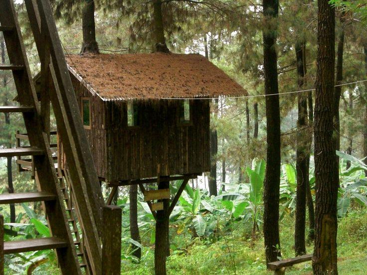 Rumah Pohon | Khayalan Ketika Saya Kecil