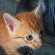 "What Is ""Fading Kitten Syndrome"" and Why Do So Many Foster Kittens Die from It?"