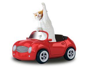にゃらん Cat Car