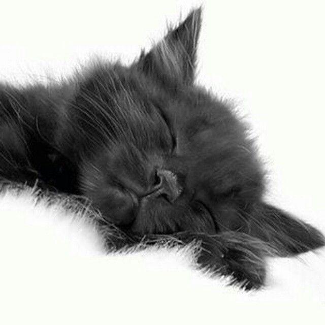 Ora della nanna ♡   Dolci Sogni #a-mici !  #Buonanotte !   #Goodnight…