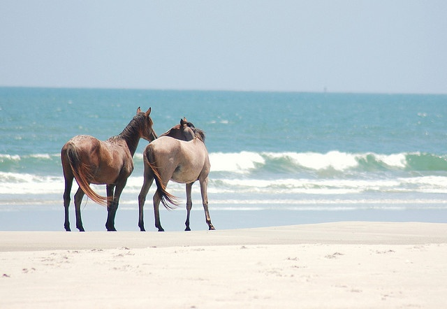 Wild Horses (Cumberland Island, Georgia) by JAM Photography - By Justin A. Mercer, via Flickr