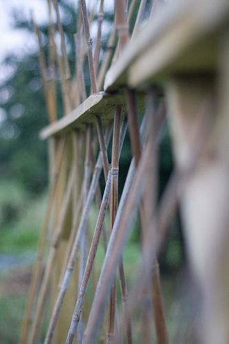 Bamboo bean pole trellis. Ewa in the Garden: 14 ideas for bean poles - Inspirational Monday
