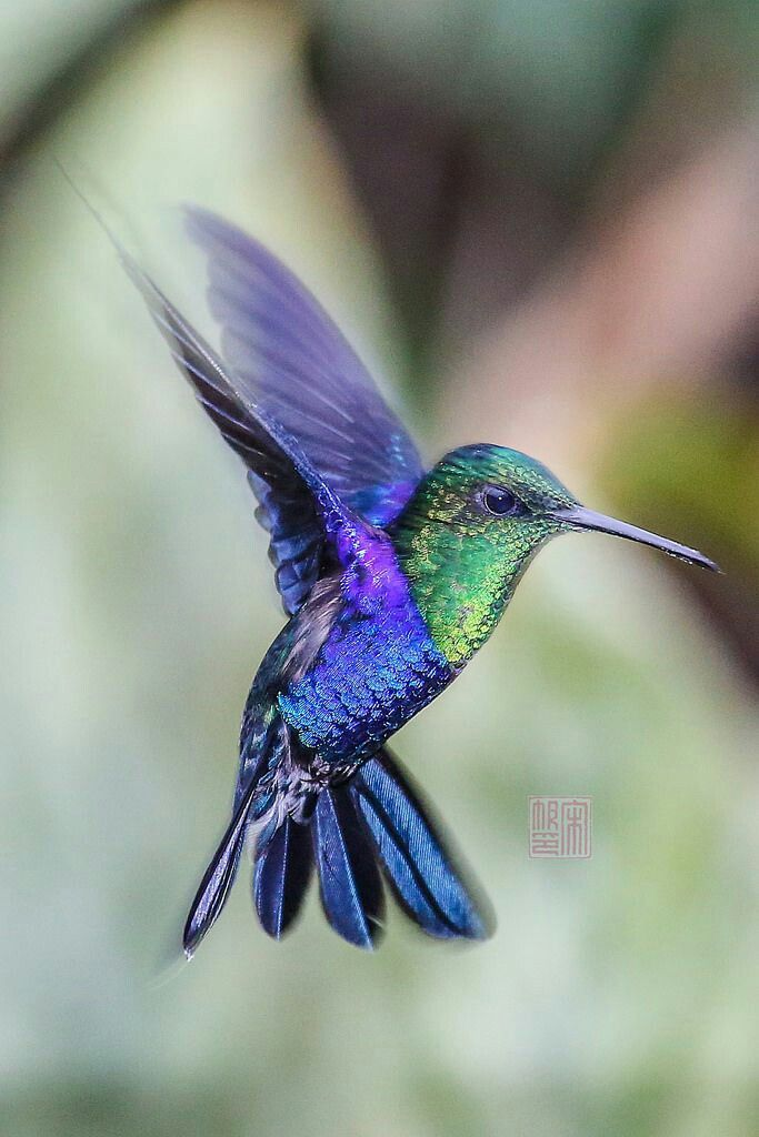 Flying Jewels, God`s Awesome & Gorgeous Creation. : Photo