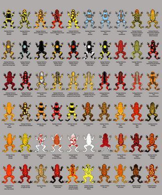 Harlequin Dart Frogs. I have 2 of the yellow and black ones in the upper left corner!!