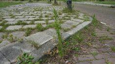 Reken af met onkruid in je tuin. Milieuvriendelijk en erg makkelijk! Gebruik azijn voor het verwijderen van onkruid.