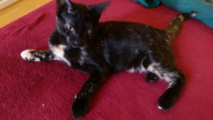 This litter of kittens is available for adoption at