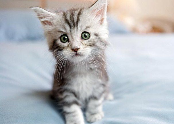 A kitten using the thirds rule :3  The eyes are towards the top left intersection, the focus used to good effect.  10-kitten-cuteness-1.jpg (606×434)